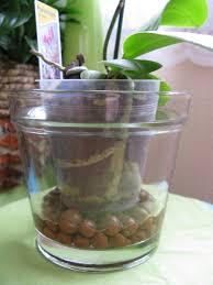 pot fleur transparent pour orchidee