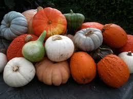Fertilizer For Pumpkins And Watermelons by Decorating With Pumpkins Bonnie Plants
