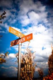 Hartsburg Pumpkin Festival 2015 Dates by Nobody Celebrates Fall Like Newburyport The Pumpkin Festival Fall