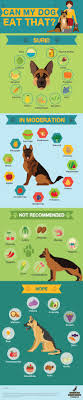 Best 25+ Pet Care Ideas On Pinterest | Dog Care, Puppy Care And ... Cloud Nine Dog Traing Best Houses In 2017 For Both Indoor And Outdoor Use Siberian Husky Costs Facts Infographic Ultimate Guide Farmer Tag Wallpapers Country Children Tractor Fields Farm Dogs Plastic Dog Barnhome Kennel Petshop Online 25 Food Bowls Ideas On Pinterest Project Food Cindee X Stackhouse Owyheestar Weimaraners News 614 Best Australian Cattle Images Blue Heelers 5 Facts About Dogs Deworming The Horse Owners Resource Lonely Escapes Yard To Get A Hug From His Friend Youtube Oakwood Park Morton6711