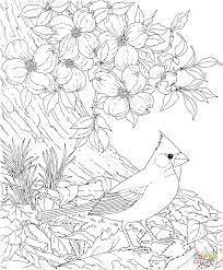 Click The Red Cardinal And Dogwood Blossom North Carolina Bird Flower Coloring Pages