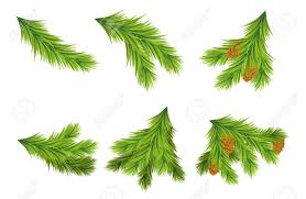 Set Of Christmas Tree Branches For Decorations Vector Illustrations On White Background Design Elements
