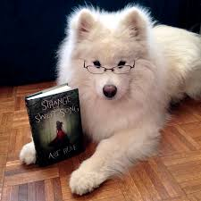 Do Samoyeds Shed All The Time by Frequently Asked Questions U2014 Harvard Dangerfield