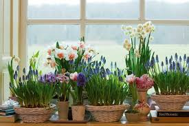 Popular Spring Home Decorating Ideas Decorations Blooming Bulbs Window Sills