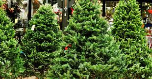 Types Of Christmas Trees Explained Douglas Fir Balsam More