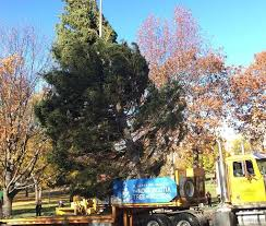 A Century Old Boston Christmas Tree Tradition Costs Canadians Big