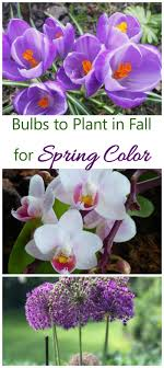 bulbs to plant in fall get blooming bulbs in before winter