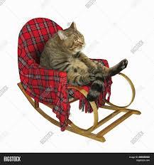 Cat Sitting Rocking Image & Photo (Free Trial) | Bigstock