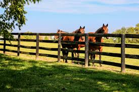 Barns/Grounds - The #1 Resource For Horse Farms, Stables And ... Defeat The Enemy Fly Control Options For Horse And Barn Music Calms Horses Emotional State The 1 Resource Breyer Crazy In At Schneider Saddlery Horsedvm Controlling Populations Around Oftforgotten Bot Equine Dry Lot Shelter Size Recommendations Successful Boarding Your Expert Advice On Horse 407 Best Barns Images Pinterest Dream Barn Barns A Management Necessity Owners Beat Barnsour Blues Care Predator Wasps Farm Boost Flycontrol Strategies Howto English Riders
