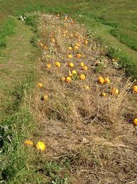 Apple Orchard Pumpkin Patch Sioux Falls Sd by Silver Creek Orchard Home Facebook