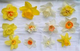flower bulb faq s a way to garden