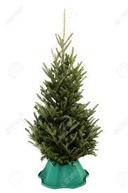 Balsam Christmas Trees Real by Real Christmas Trees Stock Photos Royalty Free Real Christmas