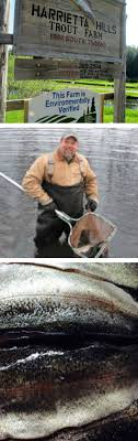 25+ Unique Trout Farm Ideas On Pinterest | Gifu, Gokayama And ... Build Your Own Backyard Pond Fish Farm Minnow Bait Trap Breeding Bestfishforaquaponic1 Aquaponics Greenhouse Pinterest Sustainable Farming How To Dig A Raise Backyard Aquaponic Fish Hatchery Youtube Stock Rainbow Trout In Back Yard Commercial Feed Wikipedia In Home Worldwide To Insteading For Food Or Profit At My Tank Small Scale Based Farms Aquaculture Equipment Landbased Project Ras Indoor