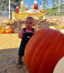 Shawns Pumpkin Patch Los Angeles Ca by Shawn U0027s Pumpkin Patch Home Facebook