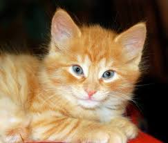 orange cat names unique cat names cat names cat names city