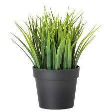 plantes pour bureau plante bureau les plantes vertes au bureau bonnes pour la