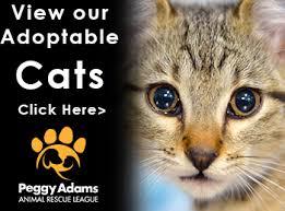 adopt a cat adopt a friend peggy