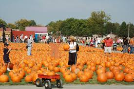 Pumpkin Picking Corn Maze Long Island Ny by Largest Pumpkin Patch Long Island Has To Offer
