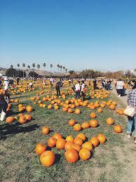 Pumpkin Patch Cal Poly Pomona by November 2014 U2013 S H A N N O N I N O