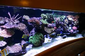 Pieter Van Suijlekom's Reef Aquarium Revisited 75 Gallon Tank Aquascape Ideas Please Reef Central Online Community Minimalist Aquascaping Page 3 2reef Saltwater And How To A Aquarium Youtube Tank Rockscape To Drill Cement Your Live Rock Gmacreef Columns In A Saltwater Callorecom Pieter Van Suijlekoms Revisited Is There Science Live Rock Sanctuary The Why I Involuntarily Redid My Mr 7