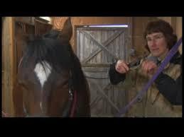 Dog Horse Shedding Blade by Horse Grooming Tools Using Horse Shedding Blades Youtube