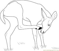 Key Deer Coloring Page