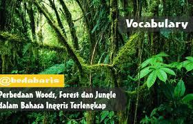 perbedaan woods forest dan jungle dalam bahasa inggris