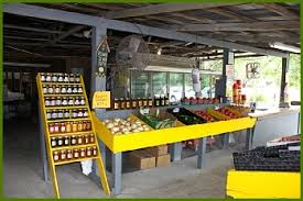 Ergle Christmas Tree Farm Oklahoma by 12 Places In Florida Where You Can Pick Your Own Tasty Food