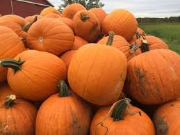 Pumpkin Patch Milwaukee by 2017 Halloween Events Around Milwaukee And Southeast Wisconsin