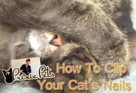 how to cut a cats nails how to clip cat nails trimming your cat s claws
