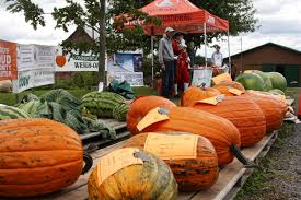 Largest Pumpkin Ever by Welcome To A Brand New Pumpkin Growing Season