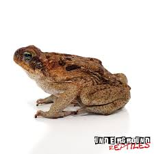 South American Giant Marine Toad Coupons Coupon Codes Promo Codeswhen Coent Is Not King Nordvpn January 20 Save 70 Avoid The Fake Deals How To Find Discount Codes For Almost Everything You Buy Dtcs 100 Most Successful Holiday Campaigns Offers Data Company Acvities Pes4work Lets Do Mn Lloyds Blog Retailmenot Sues Rival Honey Over Patent Fringement Levis Uses Gated Military Offer To Acquire New Customers American Giant Hoodie Coupon Code Bq Black Friday Preylittlething Discount 21 Jan Off Giant Cuddly Dog Toy Pawphans Large Plush Soft Classic Full Zip Black