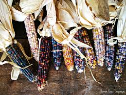 Glass Gem Corn Seeds   OliveLoaf Design Prettiest Popcorn I Ever Did Grow The Unfettered Fox Glass Gem Corn Littlegirlstory Glass Gem Corn The Cover Of Our Whole Seed Catalog Carls Flint Is An Unbelievably Stunning Bred By Part Hdenosaunee The Iroquois Confederacy Tuscarora White Oliveloaf Design Afbeeldingsresultaat Voor Peru Brazil Colored Pinterest 9 Best Sweetcorn Images On Color 2 Cob And Maze Story Behind Business Insider 1293 Indian Fruit Pink Popcorn