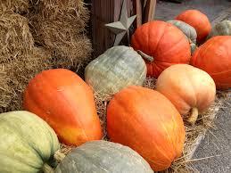 Varieties Of Pumpkins by Food Or Decoration Here U0027s Our Heirloom Pumpkin Advice Wolff U0027s