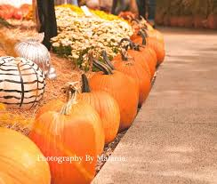 Pumpkin Patches In Okc by A Snap Happy Mom U0027s Life October 2013