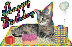 Funny Birthday Cat 2 Hd Wallpaper