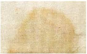 enlever urine de sur canapé tache d urine tout pratique