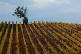 Sunlight Landscape Nature Love Grass Sky Field Farm Tuscany Vineyard Tree Autumn Harvest Colours Amazing Fuji