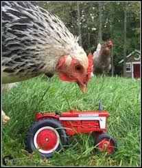 Tractor Supply Heat Lamp by 58 Best Tractor Supply Goodies Images On Pinterest Goodies