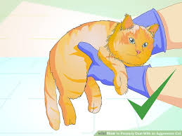 aggressive cat 6 ways to properly deal with an aggressive cat wikihow