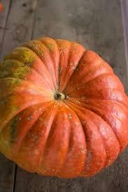 Fertilizer For Pumpkins And Watermelons by Vif D U0027etampes Pumpkin Heirloom 105 Days