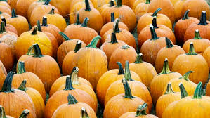 Pumpkin Patch Near Pensacola Fl by Events Sonshine Family Farms