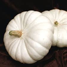 Fertilizer For Giant Pumpkins by Flat White Boer Ford Pumpkin Seeds From Park Seed