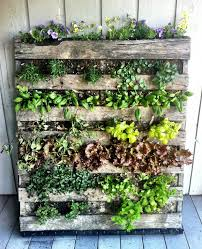 Veggies In Pallet Garden