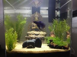 Spongebob Aquarium Decor Set by My Buddha Zen Aquarium Fish U0026 Aquariums Pinterest Buddha Zen