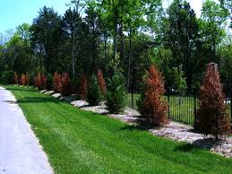 Qvc Christmas Trees In July by How Much Does Tree Removal Cost Angie U0027s List