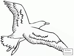 Birds Flying Sea Gull Seagulls Coloring Pages For Kids