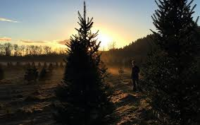 Christmas Tree Farm Near Lincoln Nh by Neb Tree Farmers Still Impacted By 2012 Drought Morning Ag Clips