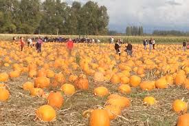 Pumpkin Patch Near Vancouver Wa by Tricounty Farm Fresh