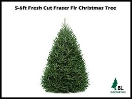 Fraser Christmas Tree Care by 25 Unique Real Christmas Trees Delivered Ideas On Pinterest